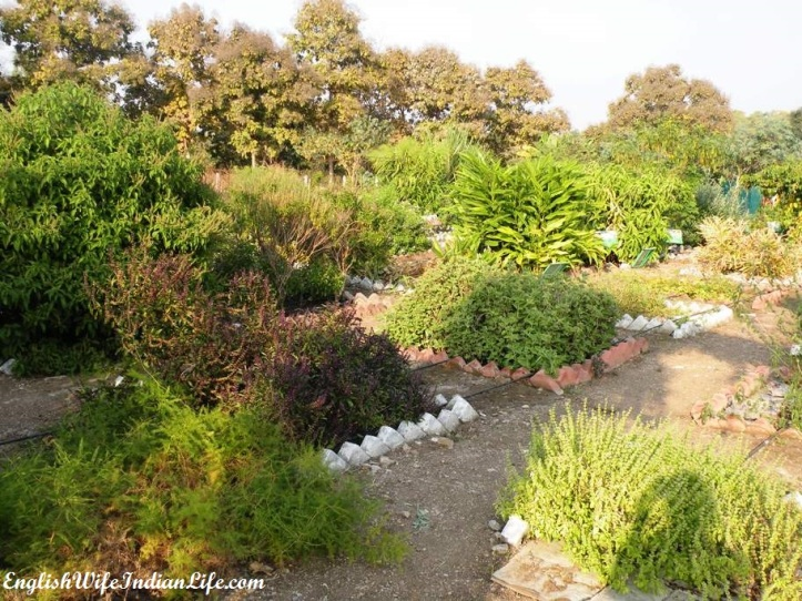 botanical garden nagpur