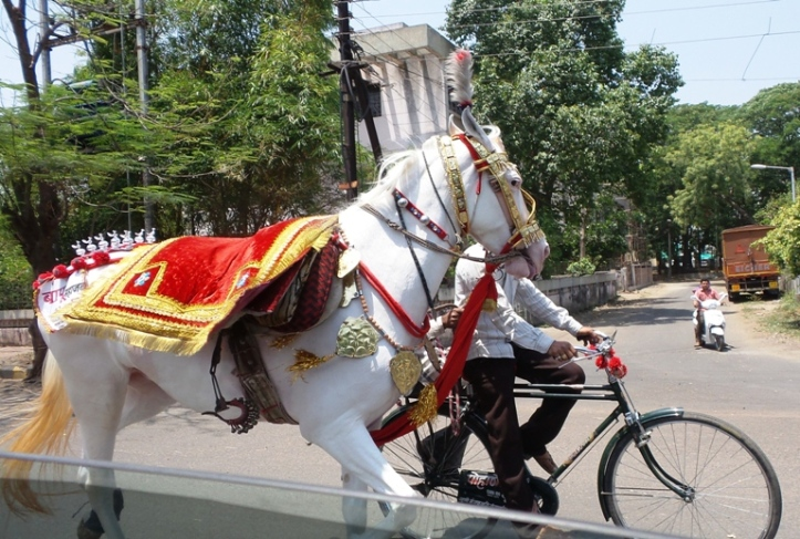 horse-on-its-way-to-a-wedding